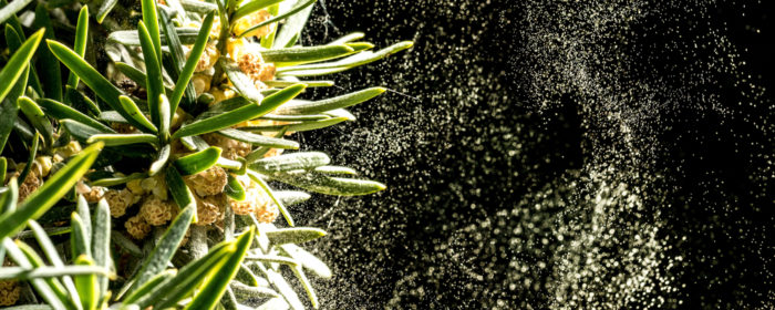 Kan våren gi fleire allergi symptomer hjå barn?